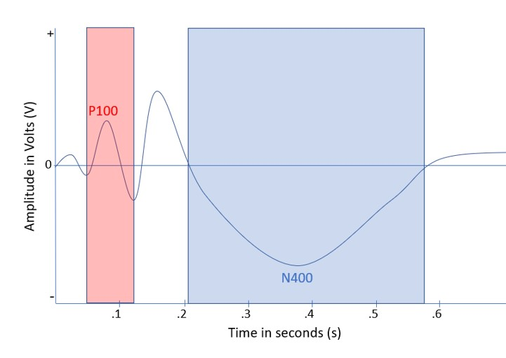 The P100 is the second positive bump, and the N400 is larger and is the third negative bump.