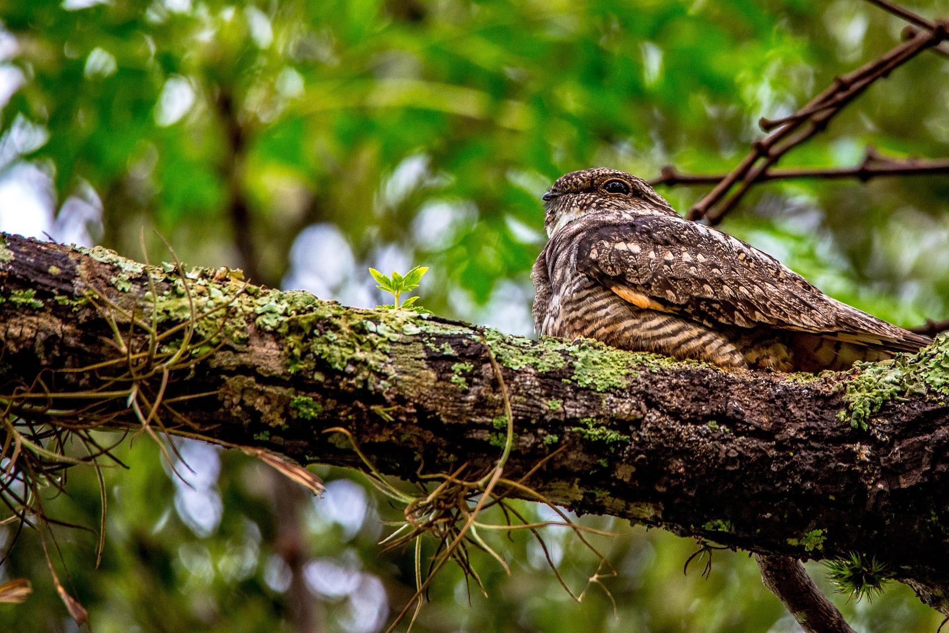 An unasumming brown bird sits on a branch.